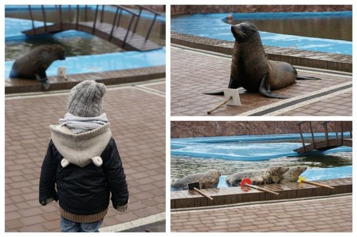 Sea Park - Fokarium Sarbsk3