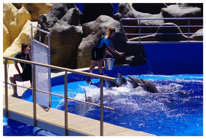 delfin00