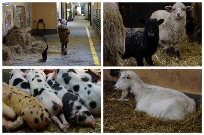 20180310 Szreniawa Muzeum Rolnictwa22